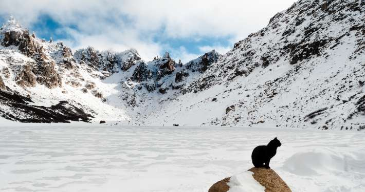black cat seated near snowy mountains