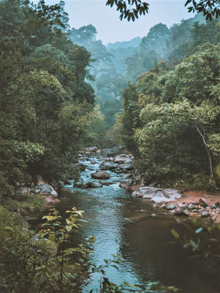 meditative view of a river with trees and mist in the background
