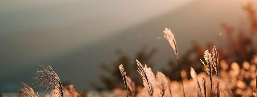 Vue d'une montagne au coucher de soleil avec des herbes hautes au premiere plan