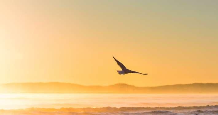 Oiseau en volant au couchant