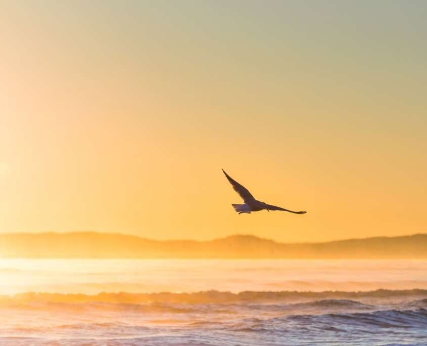 Bird flying in the sunset by sea